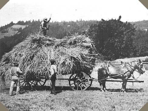 a horse-drawn wagon is piled with hay from the field