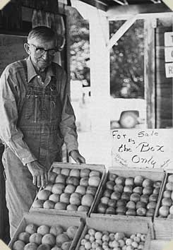 an elderly man stands next to a display of apples, mid-1900s